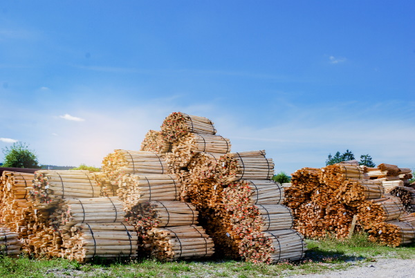 Assisting investors in a failed forestry scheme to recover losses from a negligent security trustee