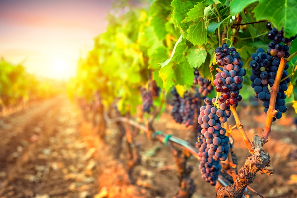 Shareholder action against Treasury Wine Estates Limited